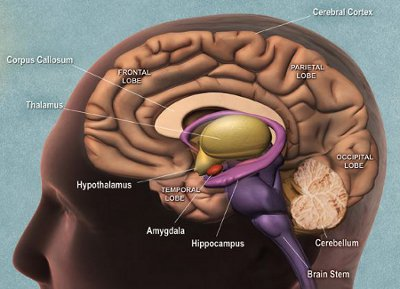 Brain side cropped: image from National Institute on Aging/National Institutes of Health